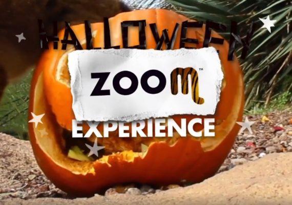 zoom halloween experience